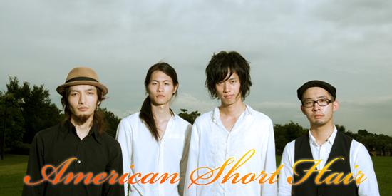 American Short Hair